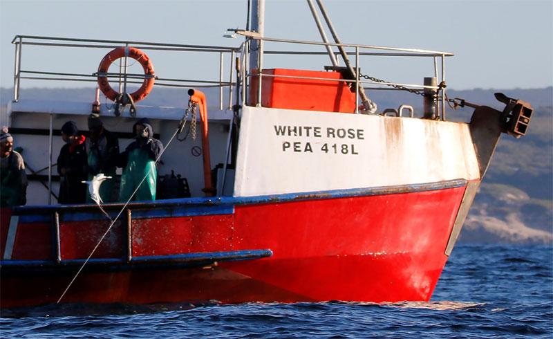Shark longline vessel